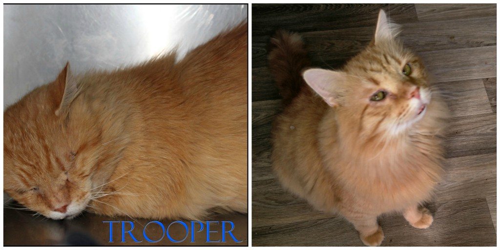 Trooper was severely depressed until SMART rescued him!